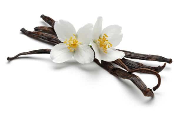 Vanilla sticks with white jasmine flowers isolated on white background